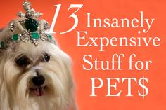 13 Insanely Expensive Stuff For Pets   Cuteness.com