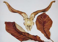 Ram's Skull with Brown Leaves, by Georgia OKeeffe