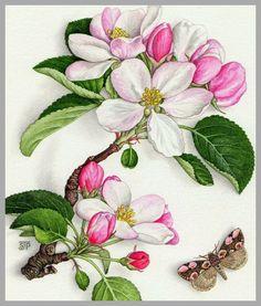Схема вышивки «Яблоневый цвет» - Вышивка крестом