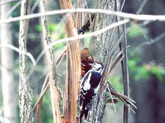 Dzięcioł Woodpecker Bird Feeders, Wordpress, Outdoor Decor, Fotografia, Teacup Bird Feeders
