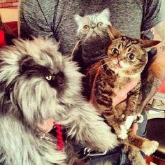 Col. Meow, Lil' Bub & friend.