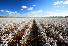 Situated in the black soil plains of the Northern Darling Downs, Dalby is a hive of rural enterprise. But it's not all work in this picturesque town.