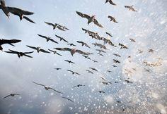 "Corey Arnold, Salt Birds, 2010, 38x56"""