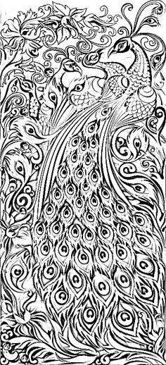 Peacock for Adult coloring pages peacock