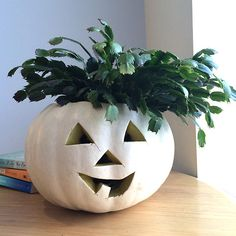 Add personality to your grinning gourd with a plant hairstyle!