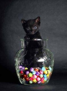 #gattonero emerge dai colori. :-) #gatti #portafortuna