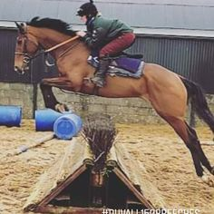 PC Original Jacket in Racing Green & A Little Bit Racey Breeches in Burgundy. All Weather Jackets, Riding Breeches, Body Warmer, Equestrian Outfits, Outdoor Outfit, Quilted Jacket, Horse Riding, Fit Women, Burgundy