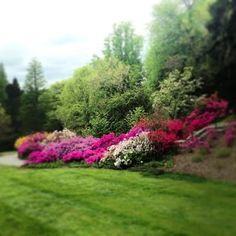 Spring beauty at Biltmore's Azalea Garden! (May 5, 2013).