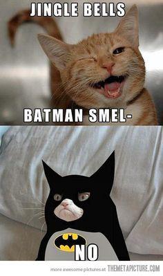 Grumpy Cat Pictures With Captions | images of grumpy cat funny caption funjooke com wallpaper