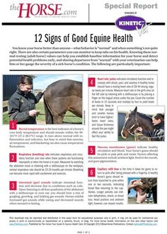 Learn about normal equine vital signs and what they mean about your horse in this information-packed report.