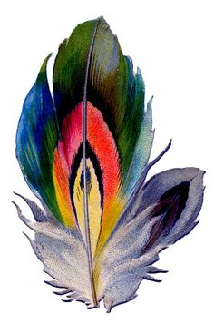 *The Graphics Fairy LLC*: Vintage Graphic - Colorful Feather