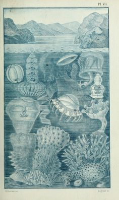 The history of creation. Ernst Haeckel.