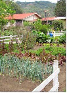 Permaculture, a Step by Step Change - The Permaculture Research Institute