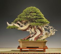 Bonsai Empire   Real tree, or fake? Photo and work by Paul Finch...