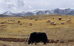 Pictures From Mongolia   Imágenes de Mongolia - Taringa!