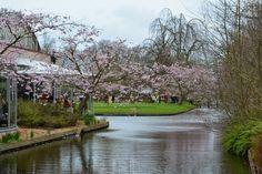 Tulip Garden, Amsterdam