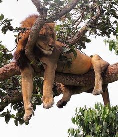 14 sleepy baby animals to sharpen your mind Nature Animals, Animals And Pets, Baby Animals, Funny Animals, Cute Animals, Wild Animals, Big Cats, Cats And Kittens, Cute Cats