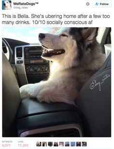 Bella — also 10/10. | Admit It, This Funny AF Twitter Account Is What We All Do To Dogs IRL