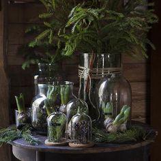 Nya vaser och kupor! Fina att fylla med lökväxter, kottar och gröna kvistar. Julen hos Granit är rustik med prylar i glas, sten och trä – och börjar redan 22 oktober! ✨#inredningsnyhet #julpynt2015 #granit #inspiration #interior #levaobo