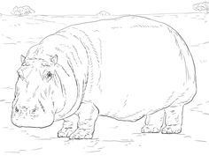 Hippopotamus Coloring Page From Category Select 20890 Printable Crafts Of Cartoons Nature