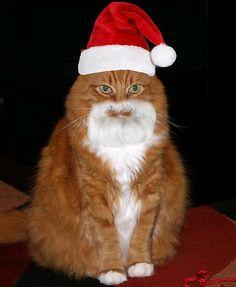 """* * """" Das it ...... me be askin' Santa fer a BB gun."""""""