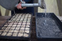 Seed starting lessons I learned the hard way - Floret Flowers Cut Flower Garden, Cut Garden, Flower Gardening, Growing Dahlias, Sprouting Seeds, Short Plants, Growing Tomatoes In Containers, Lawn And Garden, Garden Path