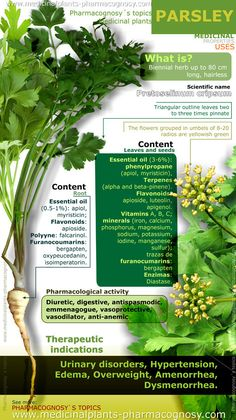 Parsley health benefits. Infographic. Summary of the general characteristics of the Parsley plant. Medicinal properties, benefits and uses more common.