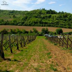 vineyard #monday #wine #winelovers #winetime #winery #mondaywine #goodtime