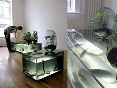 indoor aquaculture and vegetable garden