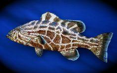 Raku fish Black Grouper Fishing Humor, Fly Fishing, Fish Sculpture, Sculptures, Fish Bathroom, Funny Fish, Raku Pottery, Number 9, Ceramic Animals