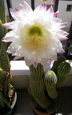 Rare Flower ... | Flickr - Photo Sharing!