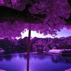 Japão.