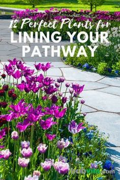 12 Perfect Plants for Lining Your Pathway Whether you live in a small cottage with a humble stoop or Lawn And Landscape, Landscape Edging, Perfect Plants, Cool Plants, Lawn And Garden, Garden Paths, Outside Plants, Vegetable Garden Tips, Professional Landscaping