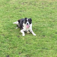 Meet Border Collie (short hair) Jessie, Dog of Steph: Short Haired Border Collie, Border Collies, Jessie, Puppy Love, Short Hair Styles, Puppies, Pets, Smooth, Animals