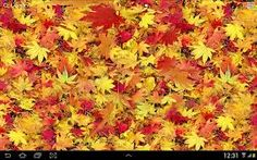 Image result for autumn leaves pics