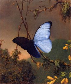 Blue Morpho Butterfly (late1880s) by Martin Johnson Heade  Martin Johnson Heade [American Hudson River School Painter, 1819-1904] Oil on canvas