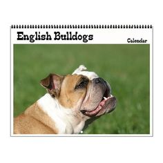 English bulldog Wall Calendar on CafePress.com