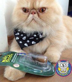 http://www.catmypet.com/mo-barato-para-gatos