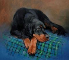 Irish English And Gordon Setters | Irish Gordon English Setter Limited Edition Prints Jacqueline Stanhope