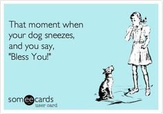 Ecard joke for you and your dog. Do you say bless you when you dog sneezes? Dog sneezes are like human sneezes and all should be blessed with love.