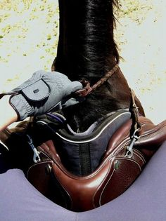 Did you know that a chair that is not adjusted to your Horse reduces more than its … – Art Of Equitation Pretty Horses, Horse Love, Beautiful Horses, Dressage, English Riding, Equestrian Style, Equestrian Fashion, Horse Pictures, Equine Photography