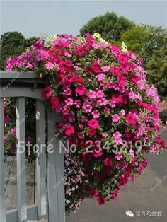 120 True Color Vine Seeds Climbing Clematis Seeds,Clematis Flower,(Not Bulbs), Outdoor Plant,Natural Growth,Bonsai Home Garden