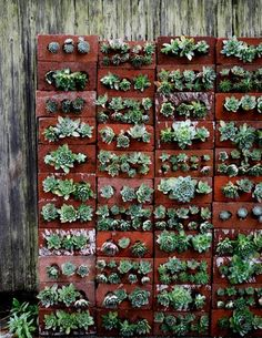 Brick & succulent vertical garden - looks like mostly Sempervivum sp. . . . thinking you might want to grow them along with the brick horizontal until the roots lock the soil in, though I can think of a few cheats that might work.
