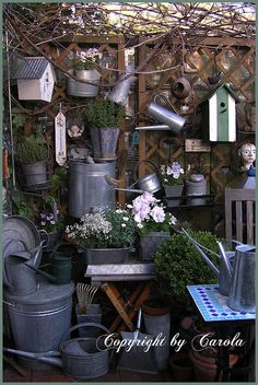 Vintage Galvanized Tins Garden Collection