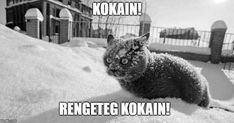 Animals are funny but the captions make them even funnier. Today we have collected top 38 fresh funny animal photos that are absolutely hilarious. These animal pictures will make you laugh out loud. Canadian Memes, Canadian Things, Canadian Humour, Funny Animal Photos, Best Funny Pictures, Snow Meme, Funny Cats, Funny Animals, Adorable Animals