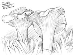 How to draw chanterelles step by step 5