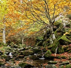 Bosques de elfos...