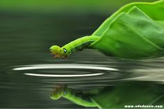 Amazing Insect Photography by Uda Dennie - 121Clicks.com