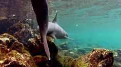 Beautiful snorkeling footage from Galapagos.