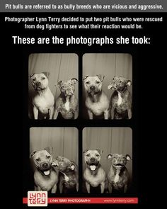 What happens when you put two pit bulls in a photo booth…❤️